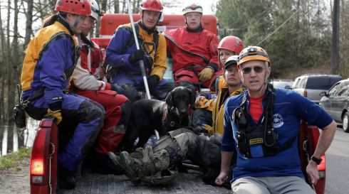 Rescue workers and dog head out to continue searching for missing people caught in the landslide along Highway 530 near Darrington, Washington.  Photograph: Jason Redmond/Reuters