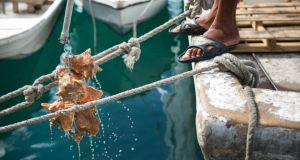 A conch merchant pulls out a haul out of the sea at Potter's Cay seafood market. Photograph: Damon Winter/The New York Times
