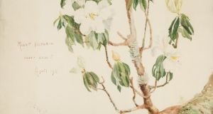 Charlotte Wheeler-Cuffe's watercolour of the white-flowered species of rhododendron Rhododendron cuffeanum, which grows on trees like an orchid, not on the ground. Photograph: Office of Public Works