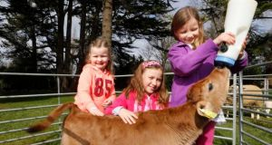 From left: Faye Mackey (5), Lauren Mackey (7) and Aisling Marriot (7) with a resident calf at the official reopening of Airfield Estate, Dundrum, Co Dublin, yesterday. Photograph: Sasko Lazarov/Photocall Ireland
