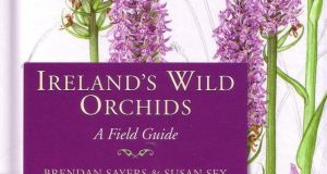 A copy of the  lavishly-illustrated Ireland's Wild Orchids by Susan Sex and Brendan Sayers made €580 (€400-€600) at Mealys