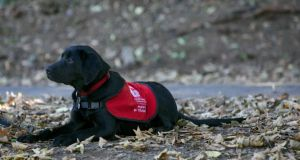 Elmo, an assistance puppy in training with Austism Assistance Dogs Ireland: children often speak around a dog where they might struggle with an adult or peer