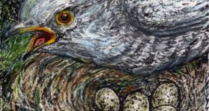 Deception: the cuckoo lays its eggs in another bird's nest. Illustration: Michael Viney