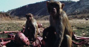 'This Monkey', a 2009 film by Patrick Jolley. Still courtesy Patrick Jolley Estate