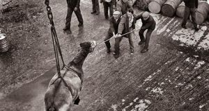 A horse being lowered from the ferry on to Kilronan pier in the early 1970s. Photograph: John Carlos