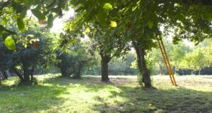 The orchard at Patricia Taylor's property in  Gascony