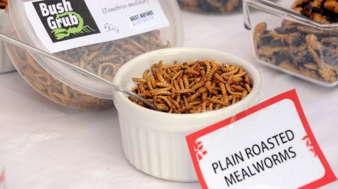Roasted mealworms on offer at the Rentokil sponsored 'Pestaurant' before the world wellie run attempt in aid of Glenflesk GAA in Killarney. Photograph: Don MacMonagle