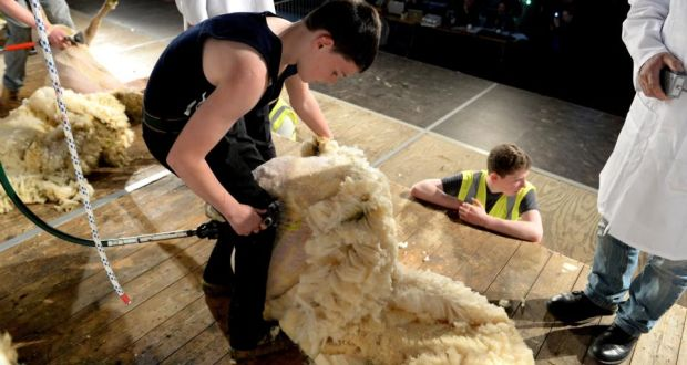 Irish Hopes High To Seize Golden Fleece In Gorey