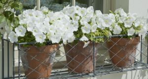 If you don't have a front garden try a window box or pots with flowers