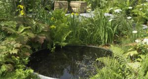 A circular pool in Deirdre Pender's Idir garden. Photograph: Richard Johnston