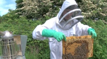 Meet the queen bee of Dublin honey