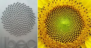 The Ibec logo is based on the spiral patterns of a sunflower. The seeds are arranged in a manner that makes efficient use of the available space, giving maximum room for each seed to flourish and minimising wastage of space.