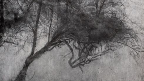 A detail from Riverbank Tree (Mist), Bernadette Kiely
