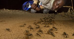 Gorongosa: EO Wilson has been studying wildlife in the Mozambican national park, including its ants. His colleagues have found more than 200 species of ant there; before a brief survey he led, only 50 were known to exist in the whole of Mozambique. Photographs: Piotr Naskrecki
