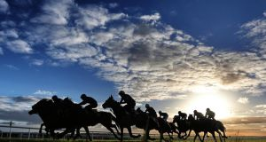 The thoroughbred county: Horses being schooled after racing at The Curragh, Newbridge. Photograph: Lorraine O'Sullivan