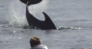 A still photograph from YouTube showing a member of the public attempting to play with Dusty the dolphin last year.