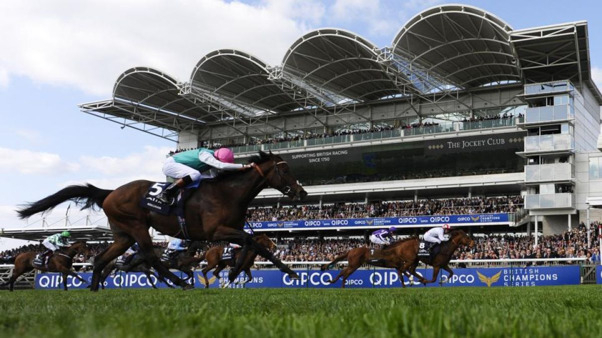 Qipco sussex stakes betting websites football betting sites tips