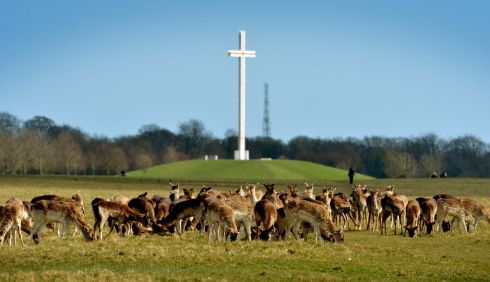 2. Phoenix Park. A large number of young deer or fawns gather by the Papal Cross. Photo: David Sleator/The Irish Times