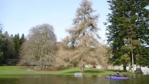 Coole Park and Gardens, Gort. Photograph: Tripadvisor