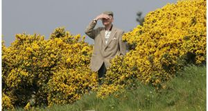 A spectator emerging from the gorse during an  Irish Amateur Open Championship  at Portmarnock Golf Club. Photo: Alan Betson
