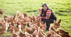Margaret Farrelly of O'Egg. The company's operation involves around 160,000 hens. photograph: seán curtin