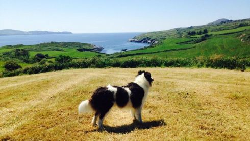 Making the most of beautiful surroundings in fabulous sunshine at Kilcrohane, West Cork. Photograph: Madeleine McKeown