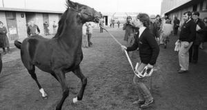 The Shergar foal in a frisky mood during a photocall with handler, Yvonne Morrissey. The foal was later sold for 325,000 guineas. Photograph: Matt Kavanagh