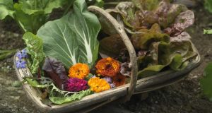 Leaves and edible flowers for the salad bowl. Photograph: Richard Johnston