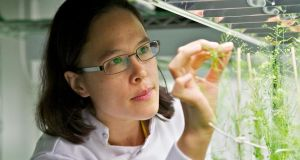 Dr Emmanuelle Graciet, who is trying to counter plant diseases.   Photograph: Emma Moseley