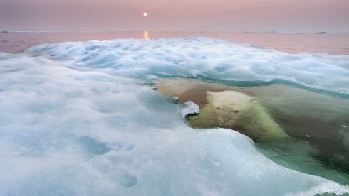 A polar bear hides beneath melting sea ice in Hudson Bay, Canada, on a summer evening. This was the winner of the Animals in their Environment section, Wildlife Photographer of the Year. An exhibition of the photographs, on loan from the Natural History Museum in London, opens at the CHQ Building in Dublin on June 27th, 2014. Photograph: Paul Souders, USA