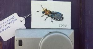 Public gallery: an EndangeredDave animal. Photograph: David Byrne/Facebook