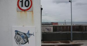 Public gallery: an EndangeredDave basking shark. Photographs: David Byrne/Facebook
