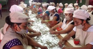 Women work the conveyor belt at a Nicaragua coffee processing co-operative, picking out unsuitable beans so the coffee can command a higher price. Photograph: Brenda Fitzsimons