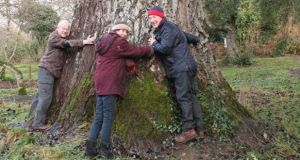 Lord and Lady Rosse of Birr Castle and Tom Roche of Just Forests hug a  200-year-old   grey poplar on the estate after it was  accepted as Ireland's nominee in the European Tree of the Year 2014 competition. It was blown down in a storm in February. Photograph: Just Forests