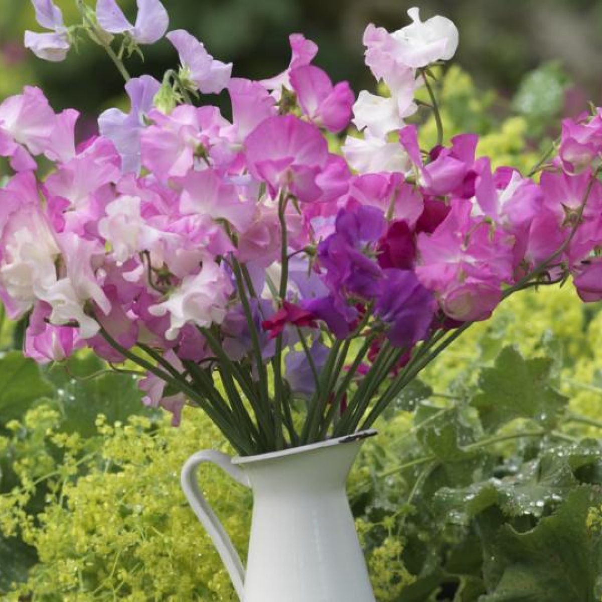 Making Scents Of Your Garden S Fragrance