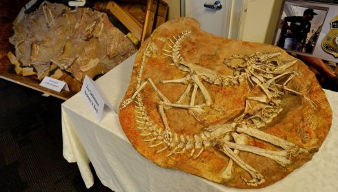A view of some of the fossilized remains.  Photograph: Justin Lane/EPA