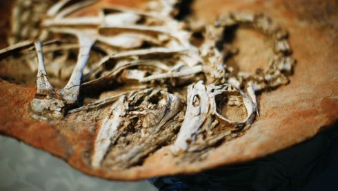 A shot illustrating the particularly three dimensional nature of the fossils. Photograph: Eduardo Munoz/Reuters