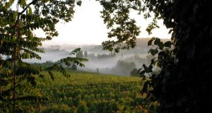 The Feely vineyard, in Saussignac, in south west France