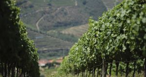 Portuguese red wines deserve far greater attention than they receive in this country. Photograph: Thinkstock