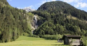 Austrian police said the woman was hiking with her dog in the Tyrol's Stubaital valley and entered a fenced enclosure containing about 20 cows and calves