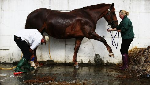 Father and daughter Derry and Sharon Rothwell wash Walnut Chase after competing.  Photograph: Brian Lawless/PA Wire