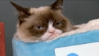 More than one thousand people gathered at a bookstore in Manhattan for their chance to meet Grumpy Cat, who is on a tour of North America to promote her new book 'The Grumpy Guide to Life: Observations by Grumpy Cat'. Video: Reuters