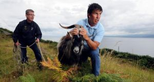 Pat Cahill and John McGrath at Dingle Bay in Co Kerry with the captured wild mountain goat that will be crowned King Puck. Photograph: Don Macmonagle