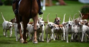 East Down Foxhounds parade in the Main Arena on the final day of the Discover Ireland Dublin Horse Show in the RDS, Dublin, today. Photograph: Dara Mac Dónaill/The Irish Times