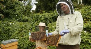 Kieran Harnett and his son Oisín with their bee hives in Dublin 9. Photograph courtesy of Kieran Harnett