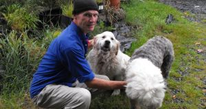 Dog psychologist John Hale: his work involves trying to connect with the dog's natural instincts to help correct unwanted behaviour