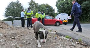 A family dog pictured yesterday morning at the scene of the fatal shooting on Tuesday night in Saggart, Co Dublin. Photograph: Colin Keegan, Collins.