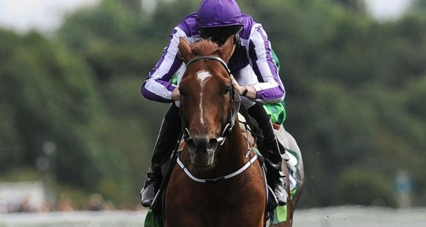 Australia will run at Leopardstown on Saturday week.  Photograph:  Anna Gowthorpe/PA Wire.
