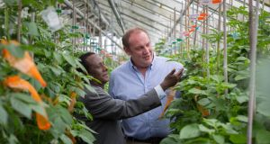 Gebremedhin Woldegiorgis, senior potato researcher at the Ethiopian Institute of Agricultural Research, and Denis Griffen, potato breeder at Teagas, inspect potato plants at the Teagasc Research Centre in Oakpark, Carlow. photograph: dylan vaughan