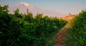 Ararat mountain and vineyards